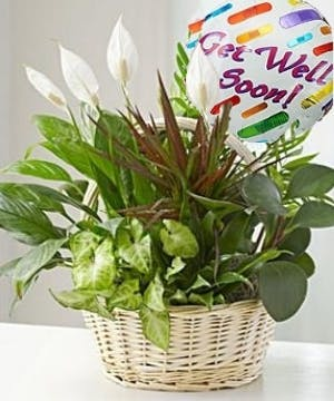 Hospital Gifts and Get Well Soon Gifts, Carithers Flowers Atlanta