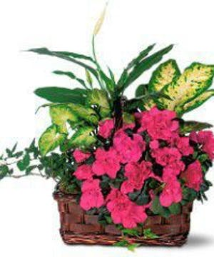 A flowering keepsake