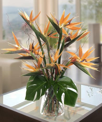 Exotic Flowers, Birds of Paradise, Atlanta Flower Delivery