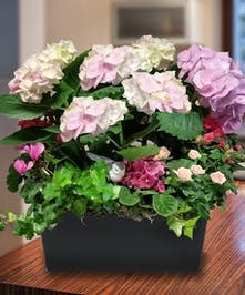 Pink Hydrangea Garden in Black Decor Container