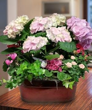 Flowering Hydrangea Garden, Carithers Flowers