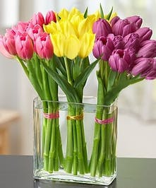 A Unique Bouquet of Holland Tulips!