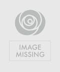 Dendrobium Orchid & Lavender Spray Roses w/ Rhinestones