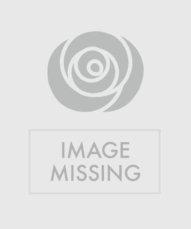 Hot Pink Roses, Florist Delivery Atlanta