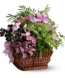 Florist Quality Plants & Gardens