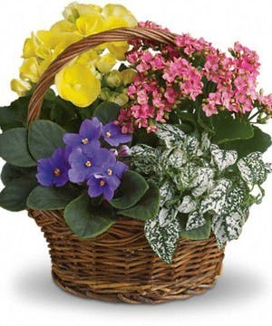 Flowering Plants, Blooming Plants Atlanta, Alpharetta, Lawrenceville, Marietta, Roswell