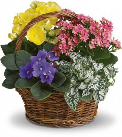 Flowering Plants, Blooming Plants Atlanta, Alpharetta, Lawrenceville, Marietta, Roswell