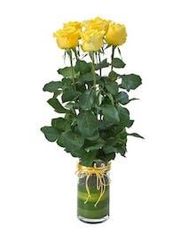 Rose Delight Bouquet