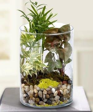 Desktop Blooming Plants