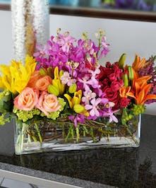 The Vibrant Floral Garden