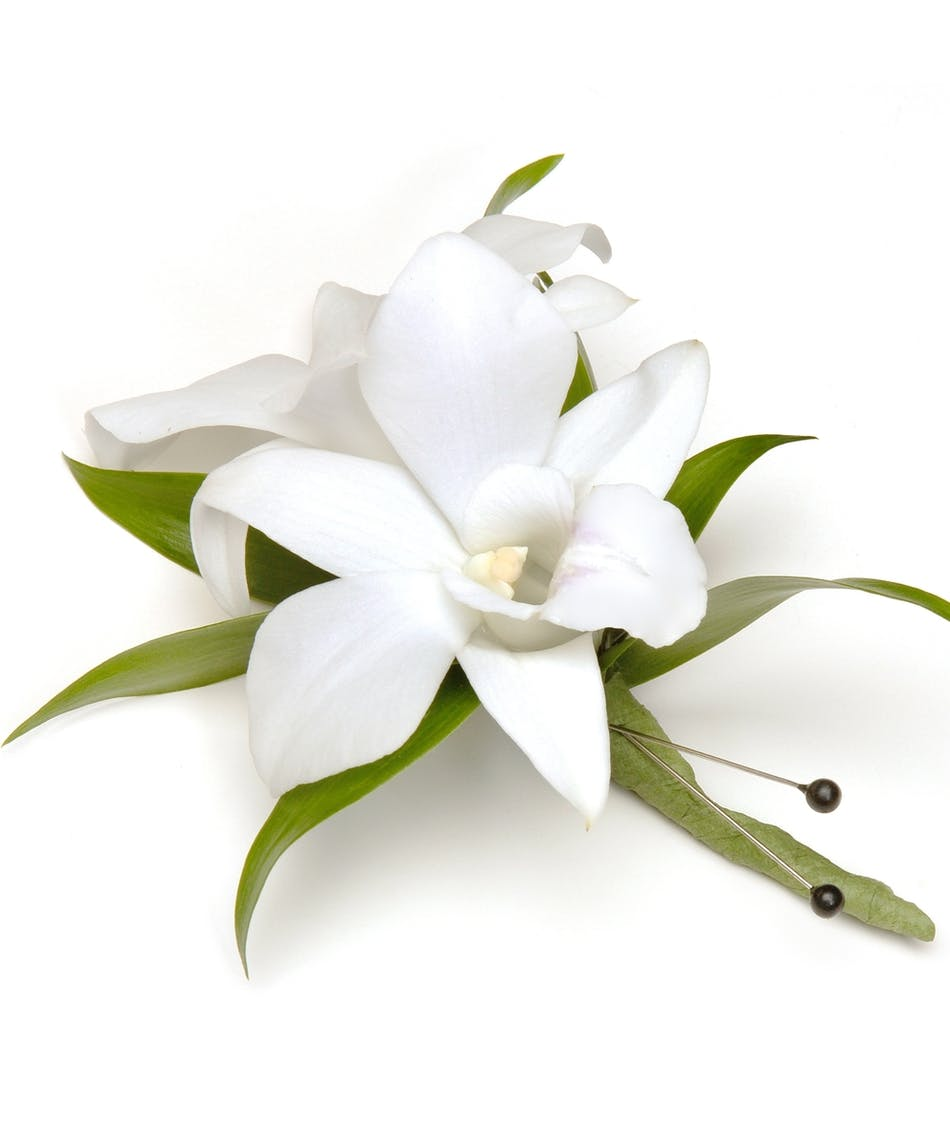 White Dendrobium Orchid Boutonniere - Carithers Flowers ...