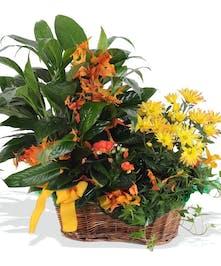 flowering garden, blooming plants atlanta
