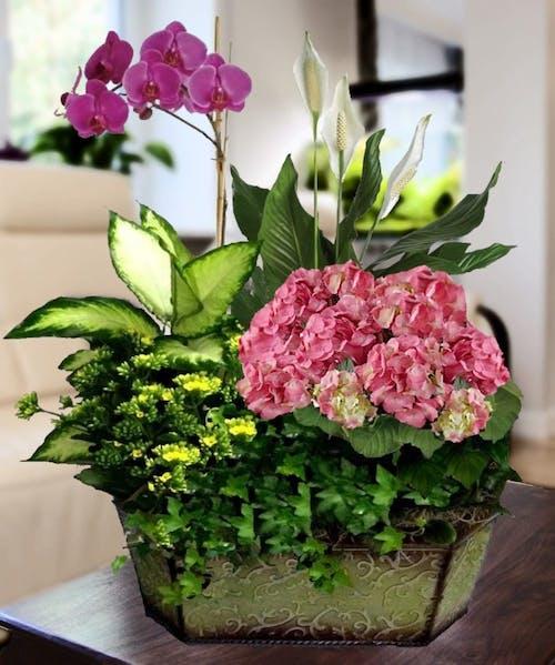 Pink Hydrangea & Orchid Garden