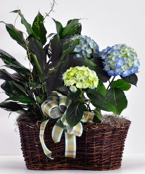 Hydrangea and Peace Lily