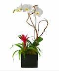Exotic Phalaenopsis Orchid & Flowering Bromeliad