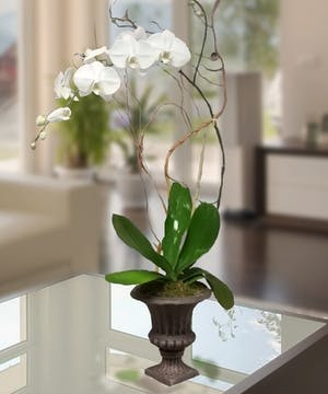 White Orchid Atlanta