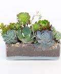 Succulent Garden - Premium