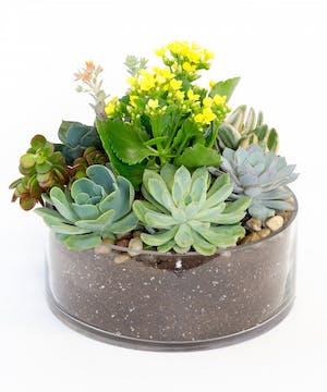 Flowering Succulent Garden