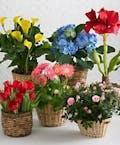 Designer Choice - Best Blooming Plant