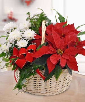 Poinsettia Garden Basket, Carthers Flowers Atlanta