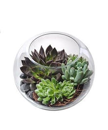 Succulent Garden in Glass