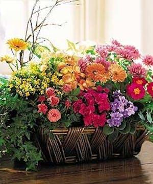 Premium Flowering Garden