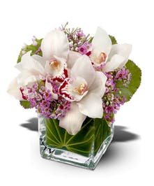 Lovely Orchids'
