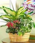 Get Well Soon Tabletop Plant Garden w/Mylar