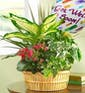 Tabletop Plant Garden w/ Get Well Mylar Balloon