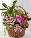 Pink Inspiration Dish Garden
