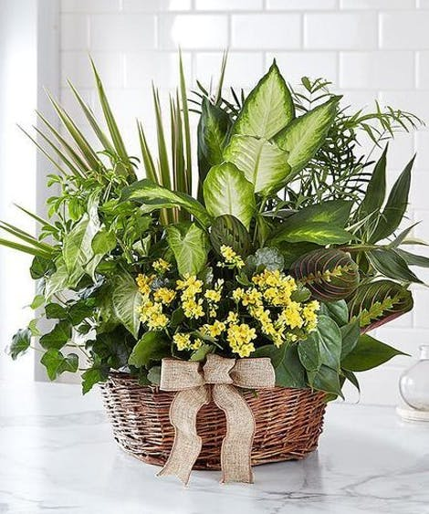 Get Well Plants & Gardens