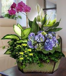 Blue Hydrangea & Orchid Garden