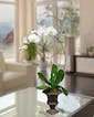 White Phalaenopsis Orchid in Decor Urn