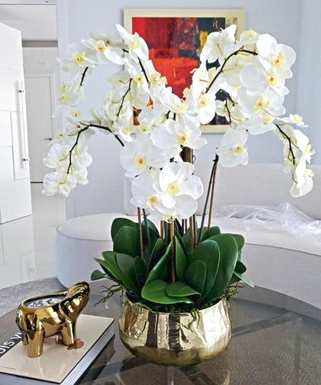 Orchids and Flowering Plants