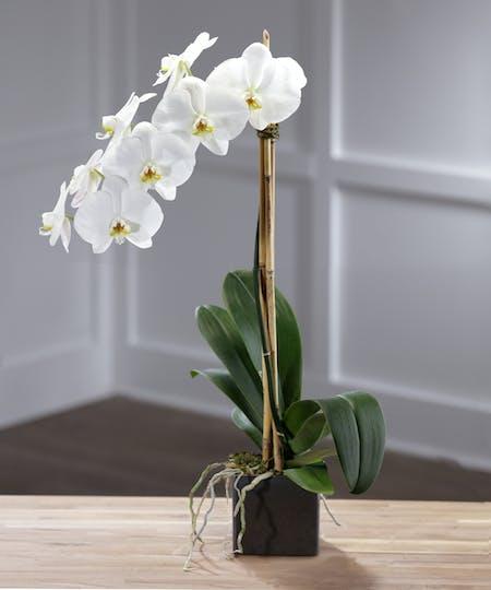 Flowering Plants & Gardens