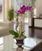 Purple Phalaenopsis Orchid in Decor Urn