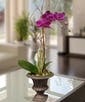 Purple Phalaenopsis Orchid in Decor Urn