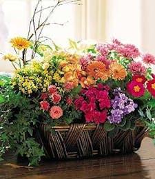 Vibrant Flowering Garden