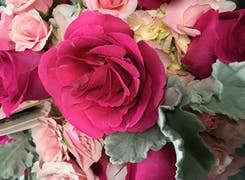 Striking pink roses in a wide range of tints and hues